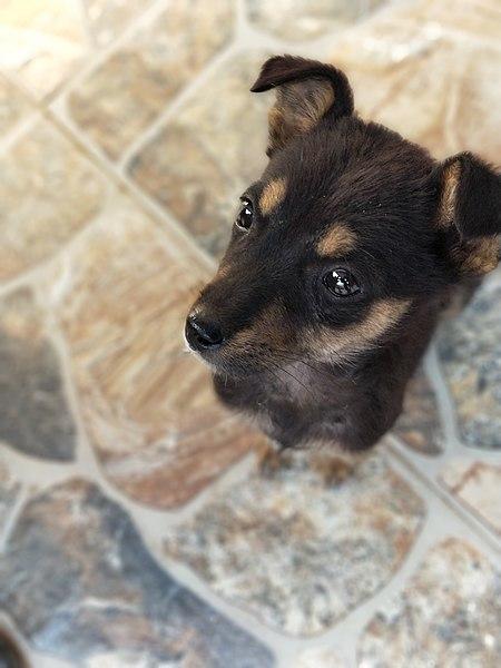File:Puppy 2.jpg