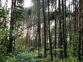 Puszcza Piska - Stare Kiełbonki 4.jpg