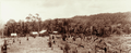Queensland State Archives 5164 Jenners Farm near Crohamhurst 6 acres under oranges and lemons c 1899.png