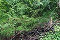 RNR du bois d'Encade dans la Vallée du Marbre (13).jpg