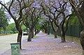 ROCA - panoramio.jpg