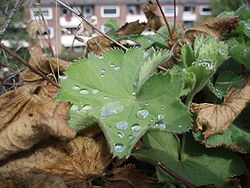 Rain-drops-on-leaf.jpg