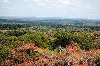 photographie aérienne de la forêt dense , une mer d'arbres où ceux-ci ne perdent pas leurs feuilles en même temps