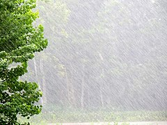 Rain in rainy season in Bangladesh.jpg