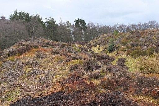 Ramparts at Northshield Rings (geograph 4891942)
