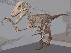 USU Eastern Prehistoric Museum -  Mounted Utahraptor in the museum's Hall of Dinosaurs