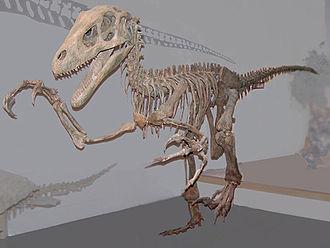 USU Eastern Prehistoric Museum - Mounted Utahraptor in the museum's Hall of Dinosaurs
