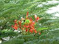 Red tree flowers.jpg