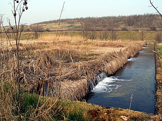Bioremediation of radioactive waste - Connected pond system at River Dearne (England).