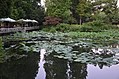 Reflections, lotus pond and a little cafe by the poolside (35777271854).jpg