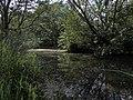 Reflexy - panoramio.jpg