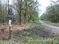 Reinhardswald typische waldszene ds 04 2009.jpg