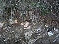 Rendzina soil (Catalonia).jpg