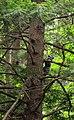 Resident Wildlife (4) (14516009307).jpg