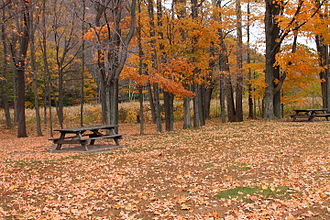 Roadside park - A roadside park in Wyoming County, Pennsylvania