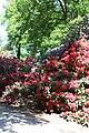 Rhododendronpark Bremen 20090513 107.JPG