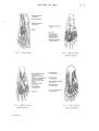 Richer - Anatomie artistique, 2 p. 74.png