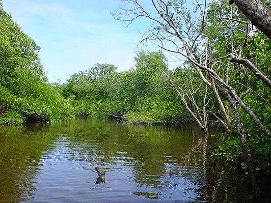Tavares River