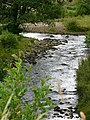 River Burn near Masham - geograph.org.uk - 436603.jpg
