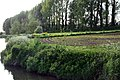 Riverside Crops - geograph.org.uk - 912763.jpg