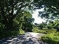 Road at Powderham - geograph.org.uk - 1418176.jpg
