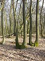 Rohrwald sl29.jpg