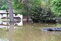Roman Forest Flood, 4-19-16 at 2-30 PM (26463009261).jpg