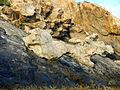 Roques del Cap de Creus.jpg