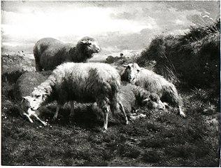 Een landschap met schapen