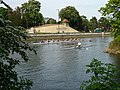 Rowers on the River Great Ouse - geograph.org.uk - 841147.jpg