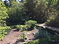 Royal Botanical Garden in Madrid 26.jpg
