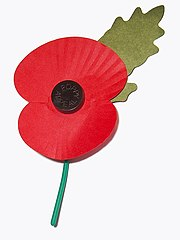 Royal British Legion's Paper Poppy - white background