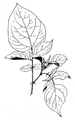 Roze fig.47.png