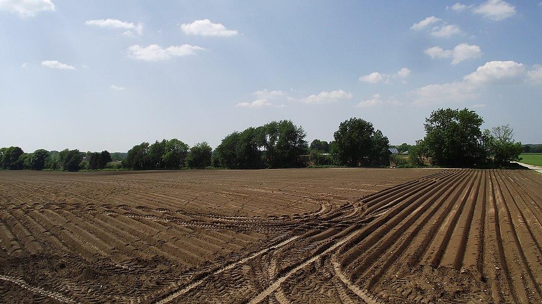 Ex-buurtspoorwegroute (de rij bomen) Sart-Risbart - Gembloux in het gebied van de gemeente Chaumont-Gistoux.