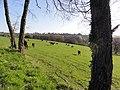 Saint-Gervais-d'Auvergne (Puy-de-Dôme) paysage à Ouches.JPG