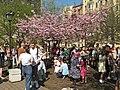 Saint Petersburg. Chinese Garden. Sakura tree2021 12.jpg