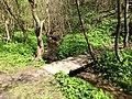 Salių upelis - panoramio.jpg