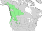 Salix scouleriana range map 3.png