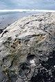 San Gregorio State Park - panoramio (2).jpg