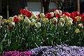 Sayen Gardens (7058918023).jpg