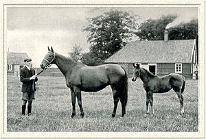 Sceptre (horse) - Sceptre and her second foal, Maid of Corinth (1907)