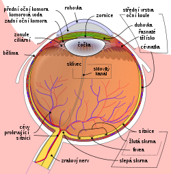 Schematic diagram of the human eye cs.svg