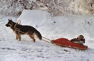 Schlittenfahrt mit Hund.jpg