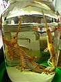 Sea dragons in vodka (5957011234).jpg