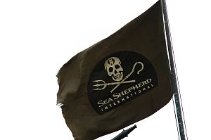 Sea Shepherd flag flying on the RV Farley Mowat.