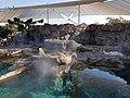 Seaworld enclosure.jpg