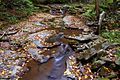 Seneca-waterfalls ForestWander.jpg