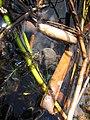 Seney National Wildlife Refuge (6092315793).jpg