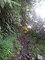 Sentier de Takamaka - panoramio.jpg