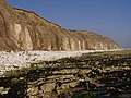 Sewerby Cliffs - geograph.org.uk - 1209168.jpg
